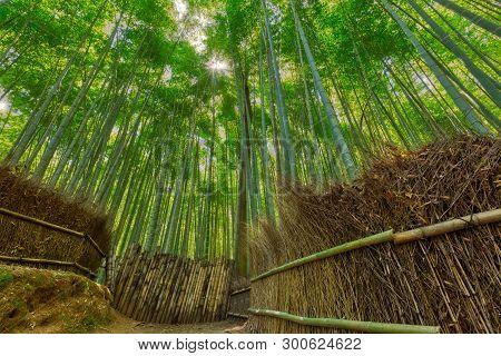 Beautiful Bamboo Forest In Arashiyama, Kyoto, Japan