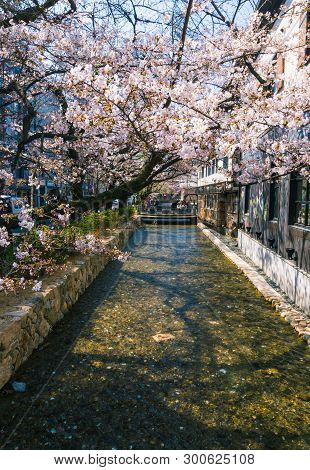 Takase River, The Famous Spot To View Cherry Blossom Or Sakura In Kyoto, Japan