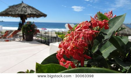 Flower by the Pacific Ocean