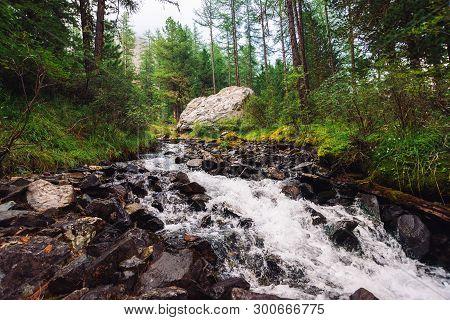 Wonderful Fast Water Stream In Wild Mountain Creek. Amazing Scenic Green Forest Landscape. Rich Vege