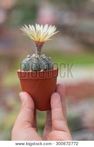 Man Holding A Small Cactus In Hand On Nature Background