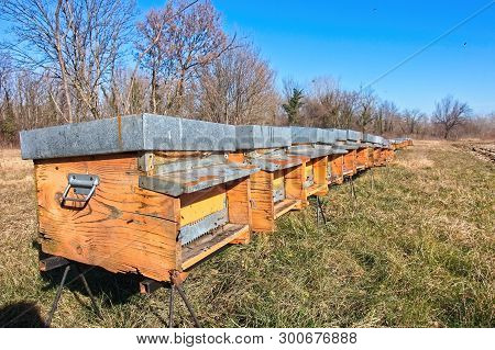 Bees In Yellow Bee Hive On A Sunny Day. A Row Of Bee Hives In A Field.
