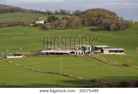 Cotswold Dairy Farm