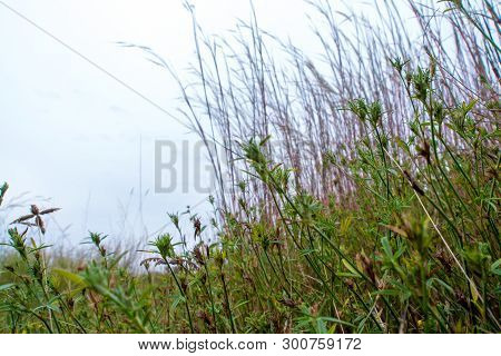 Blade Of Grass In Wind At The Grassland Countryside