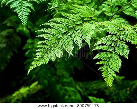 Close-up Of Freshness Fern Leaves With Moss And Algae Growing On The Moist Stone