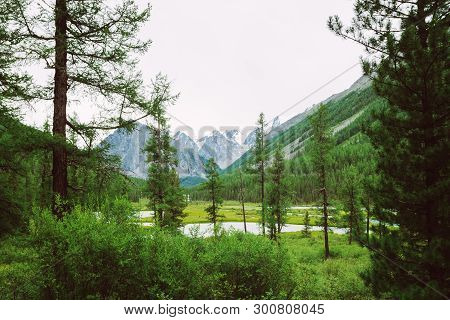 Mountain Creek Behind Coniferous Trees Against Giant Snowy Mountains. Water Stream In Brook. Rich Ve