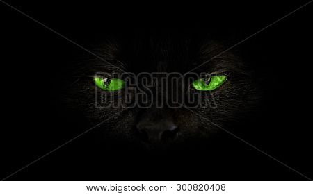 Close Up Of Black Cat With Green Eyes On Black Background. Horror Atmospheres And Halloween Concept.