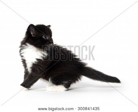 Cute Baby Black And White Kitten Isolated On White Background