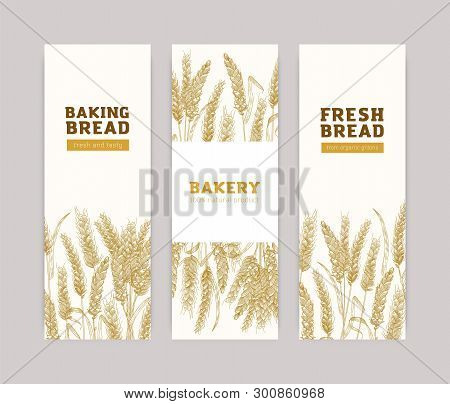 Bundle Of Vertical Banner Templates With Wheat Ears On White Background. Baked Products, Bread, Bake