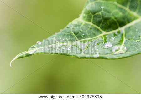 Closeup Of Raindrops On A Green Leaf With Out Of Focus Background In Nature With Natural Sunlight
