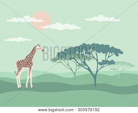 Horizontal Banner Giraffe Savannah, Vector Illustration Cartoon, African Vector Landscape With Giraf