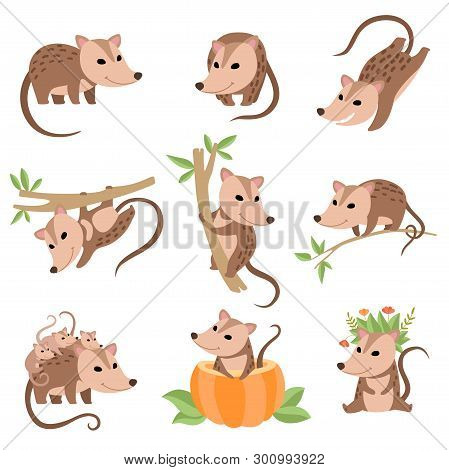 Cute Opossums Animals In Various Poses Set, Adorable Wild Animals Cartoon Characters Vector Illustra
