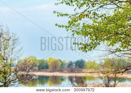 Beautiful Spring River Landscape. Sunny Morning Time. Green Leaves On The Trees, Dried Cane On The R