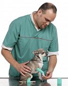 Vet examining a Chihuahua paw in front of white background poster