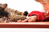 cat and child playing together touching paw and hand poster