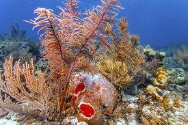 Coral Reefoff The Coast Of The Island Of Roatan Honduras