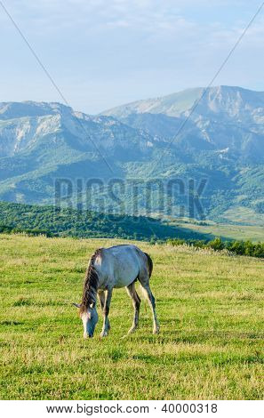 Lonely horse at the meadow