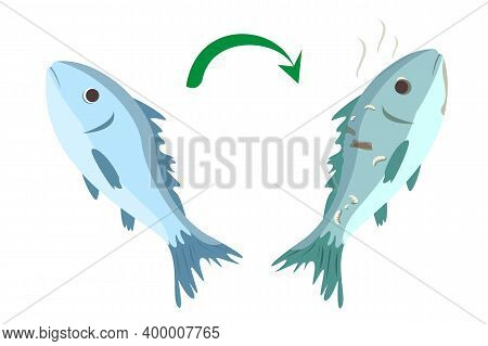 Fresh Good Fish Becomes Rotten Vector Isolated. Food Poisoning Concept, Danger For Health. Fish Stin