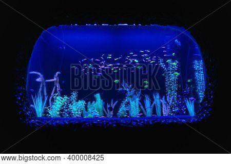 Neon Glow Fish Color Freshwater Aquarium. Underwater World Fish Aquarium In The Neon Light. The Scre