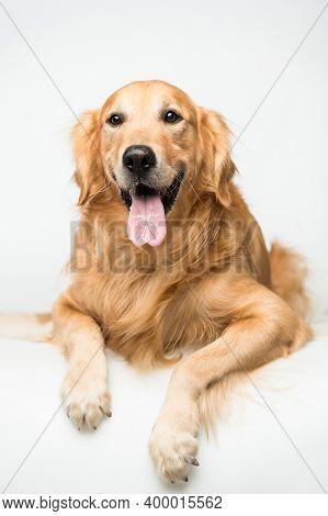 Dog On Street. Beautiful Dog On Street. Close Up Of Street Dog. Cute Little Dog Portrait. City Dog L