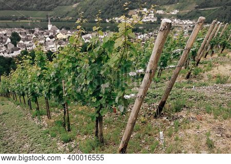 Vineyards On A Slope In The Moselle Valley In Germany