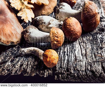 Autumn Composition With Porcini Mushrooms And Oak Leaves On Dark Old Wooden Background