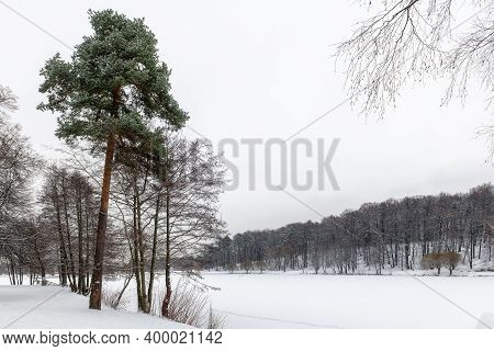 Beautiful Winter Landscape With Snow Covered Trees And Lake In Winter Park.