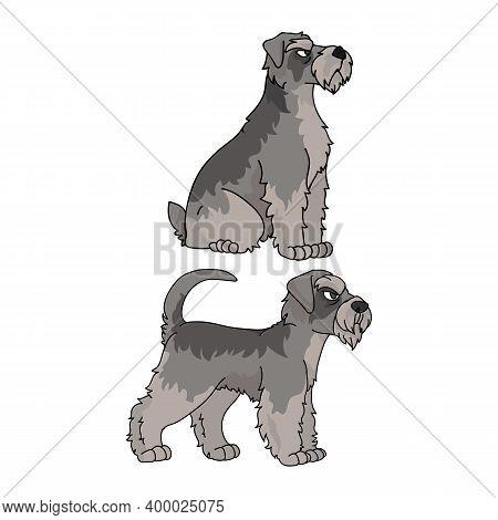 Cute Cartoon Schnauzer Dog Vector Clipart. Pedigree Kennel Doggie Breed For Kennel Club. Purebred Do
