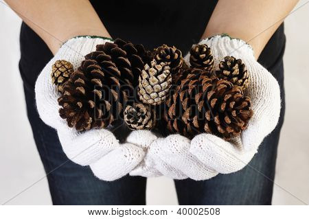 Hand Holding Pine Cone
