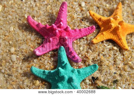 Funny Vivid Starfishes