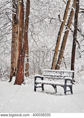 Vacant Park Bench In Winter Woods And Snowflakes