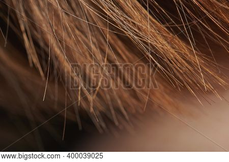 Brown Hair Ends Macro Close Up View. Healthy Hair Theme