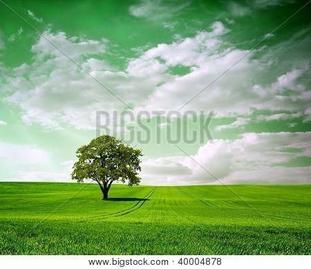 Big tree on green landscape