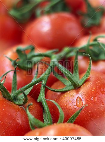 close up of a bunch of red tomatoes