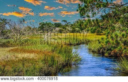 A Flock Of Birds Over Wetland Saltwater Marsh At High Tide