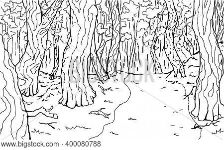 Dense Forest Footpath Line Drawing Background, Vector, Horizontal, Black And White