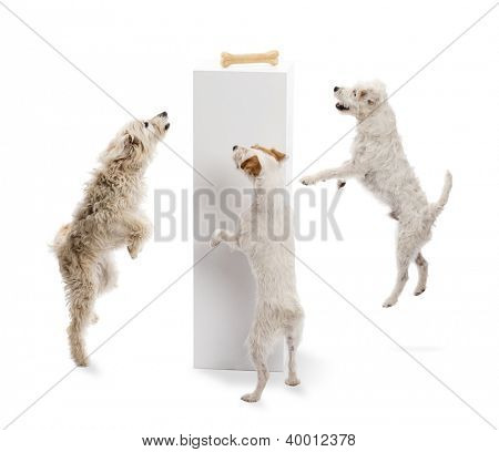 Dogs jumping and looking at a bone on a pedestal against white background