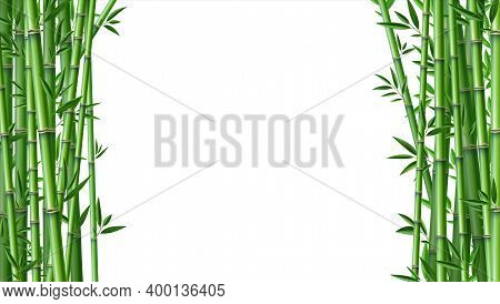 Bamboo Background. Realistic Framing Banner With Place For Text. Green Segmented Trunk And Narrow Le