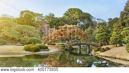 Tokyo, Japan - December 09 2020: Big Pine Trees Around A Pond With A Wooden Bridge On A Islet Under