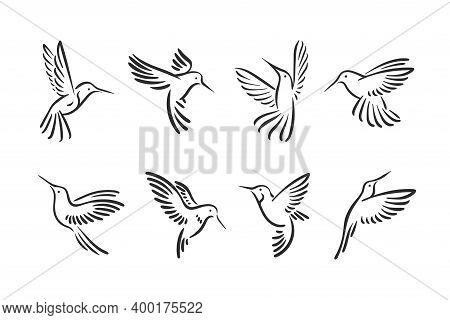 Colibri Hummingbird Flying Bird Line Style Logo Illustration