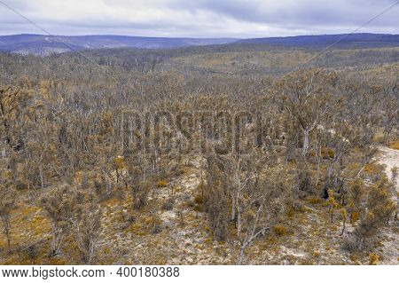 Aerial Photograph Of Forest Regeneration After Bushfires Near Clarence In The Central Tablelands In