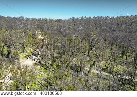 Aerial View Of A Dirt Road Running Through A Forest Affected By Bushfire In The Central Tablelands I