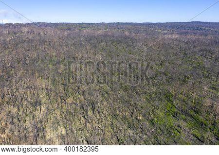 Aerial View Of Forest Regeneration After Bushfire In Dargan In The Central Tablelands In Regional Ne