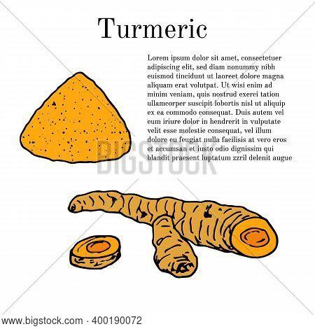 Root And Powder Of Turmeric Curcuma Zedoaria , Edible And Medicinal Plant. Hand Drawn Vector Illustr