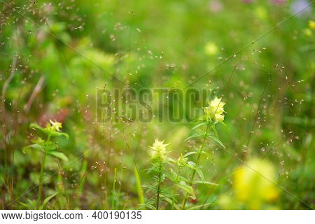A Beautiful Meadow Field With Fresh Grass, With Yellow Flowers In Nature Against A Background Of Blu