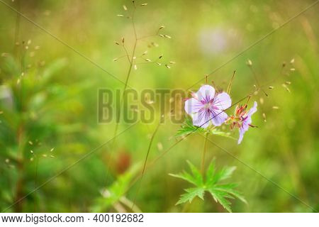 A Beautiful Meadow Field With Fresh Grass, With A Delicate Blue Flower In Nature Against A Backgroun