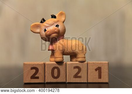 New Year 2021. Year Of The Bull To Eastern Calendar. Young Bull (goby Or Bull-calf) On The Numbers 2