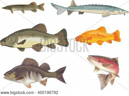 Freshwater Fish Figures Pike Sturgeon Trout Perch