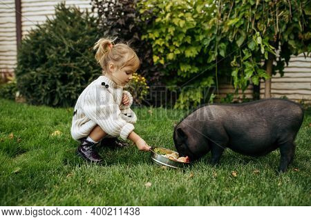 Kid feeds black pig in garden, caring for animals