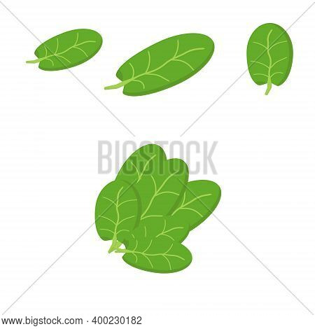 Set Of Spinach Leaves In Flat Style, Green Single Leaves Of Different Sizes And A Bunch Of Spinach,